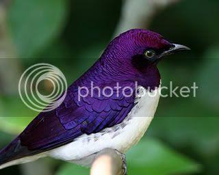 Recogeremos las plumas que hayan caído porque nunca arrancaremos una a un pájaro