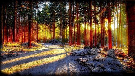 Forest sunlight wallpaper   AllWallpaper.in #13839   PC   en