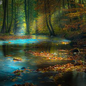 Magic Light in the Spessart / Germany by Rolf Nachbar on 500px.com
