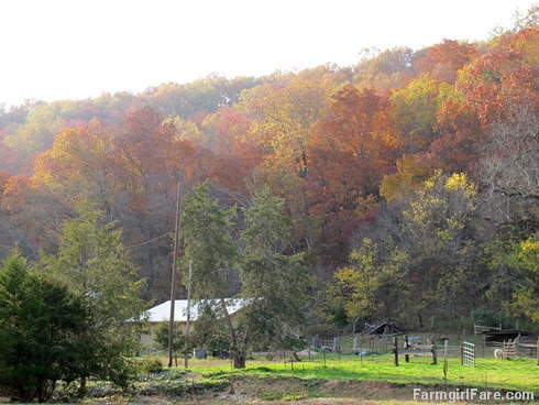 (24-1) The sheep barn surrounded by a blast of autumn color - FarmgirlFare.com