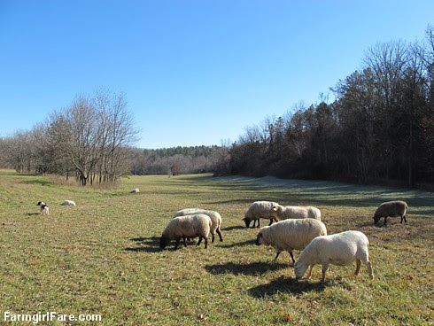 Slowly defrosting in the hayfield (8) - FarmgirlFare.com