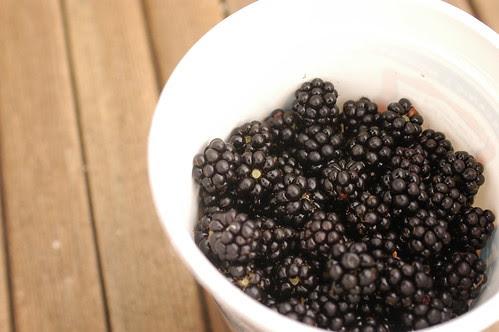 the island - blackberries