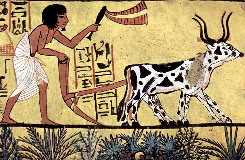 写真:農作業
