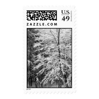 Maple Tree Outlined In Snow – Medium Stamps