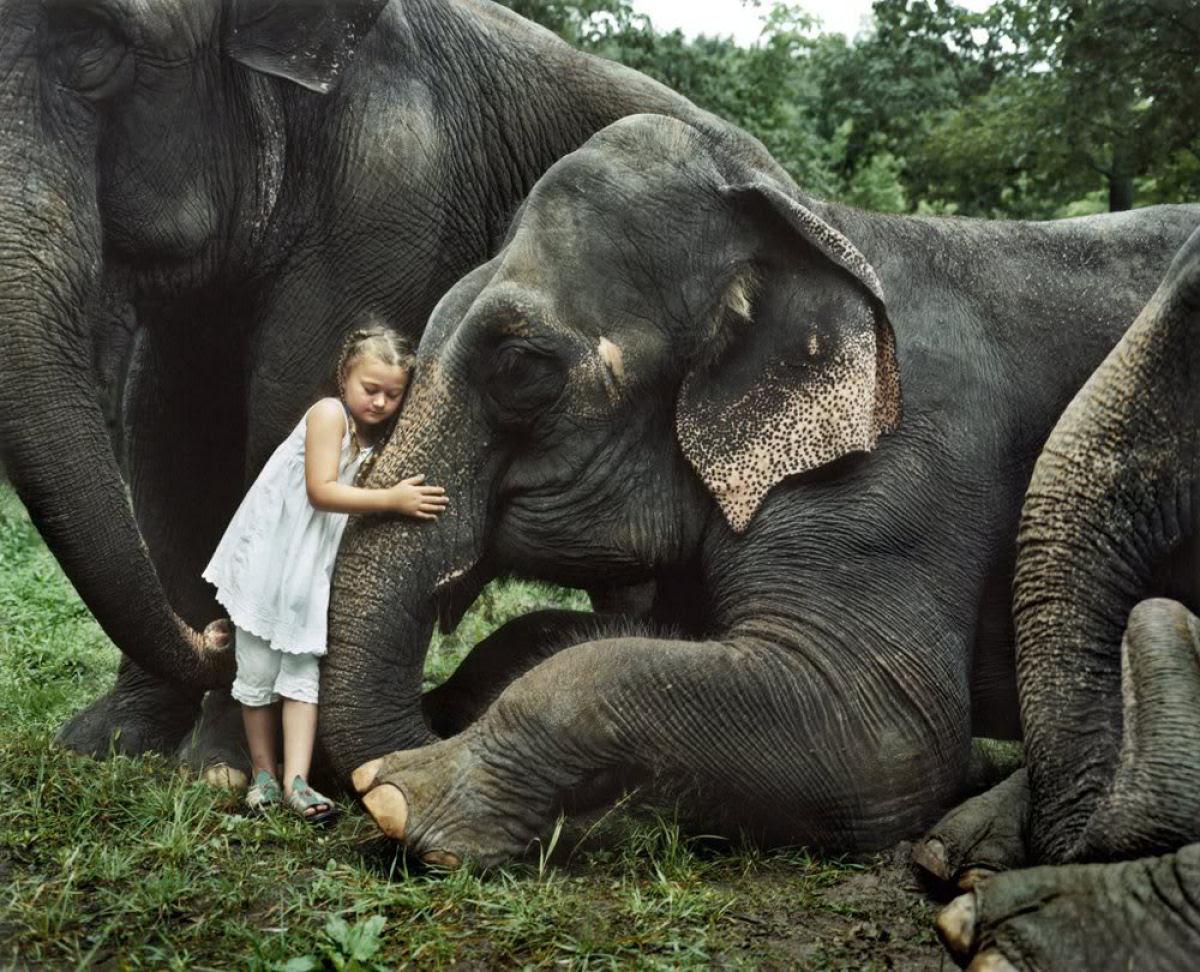 O Mundo de Amelia - A menina que cresceu com os animais e os considera seus irmãos 10