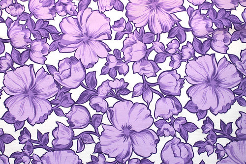 blooms in purple