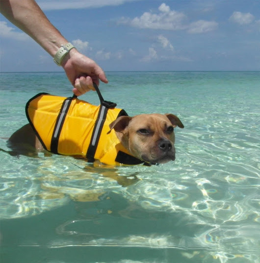 Why Dog Life Jackets Are Important!!