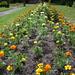 Flowers Blooming