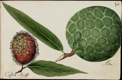 rambutan & melon-like tropical fruit