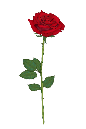 薔薇 バラ 赤 ピンク 黄色 青 秋のイラスト素材 無料テンプレート