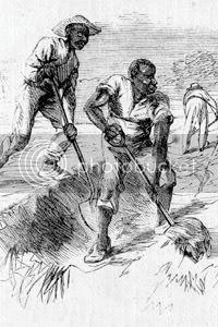 Slaves harvesting on a Georgia rice plantation