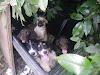 Un desalmado abandona a 9 cachorros gravemente enfermos bajo el calor porque no pudo venderlos