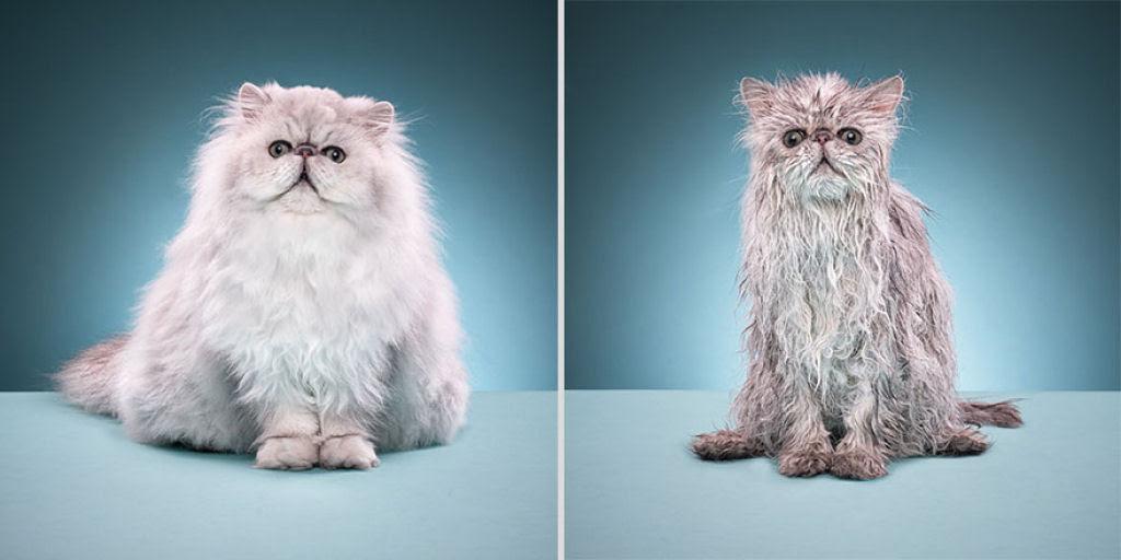 Fotografias engraçadas de gatos tomando banho 15