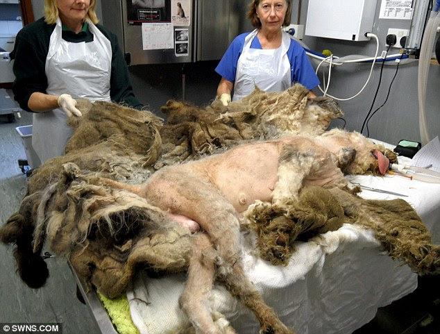 """""""Incompreensível"""": Floyd sofre de tratamento de emergência na caridade animal"""