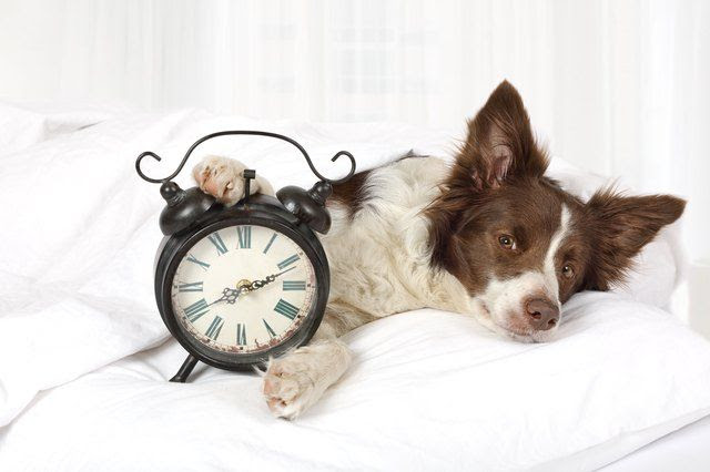 Do Dogs Understand Time?