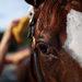 9:21 A.M. One of Pletcher's horses receiving a bath at Belmont Park.