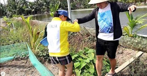Hài hước Cháu rể Hàn Quốc phụ út yêu hái rau ngổ gặp nguyên bầy kiến 🐜🐜🇻🇳300