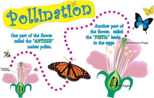 pollination_diagram e1449485643233