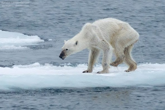 The Polar Bear Photo Seen around the World