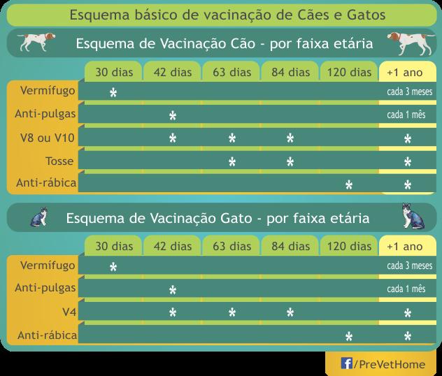 Vacinas para o filhote de cachorro