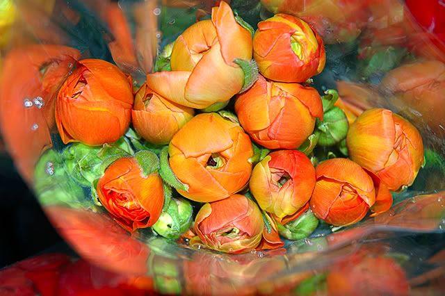 Orange are My Favorite Flowers [enlarge]