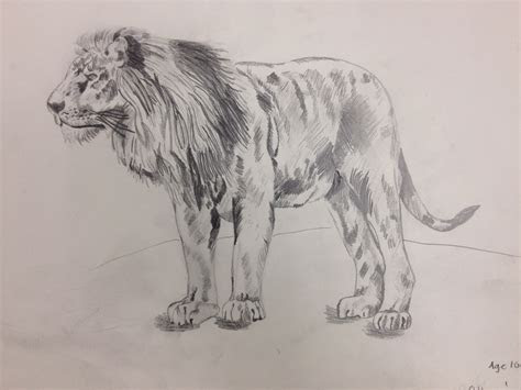 lion pencil drawing    year  art  academy