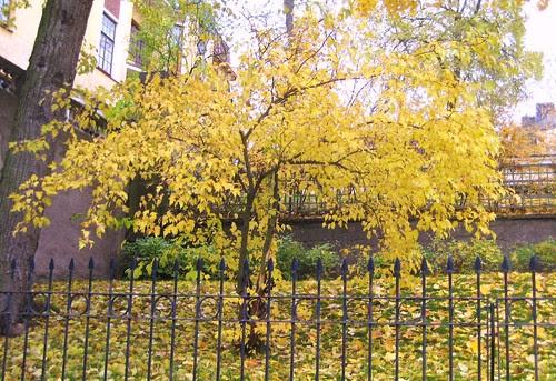 084 autumn