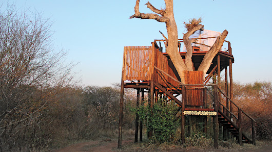 The 7 Rules for Building a Treehouse