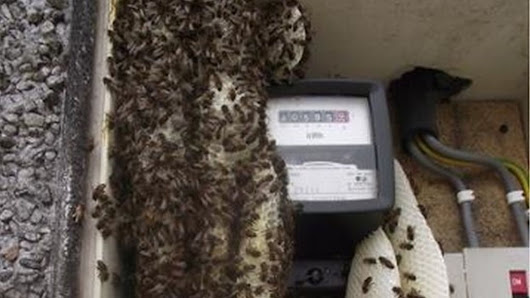 NIE worker stung by swarm of bees that built hive in electricity meter box - BBC News