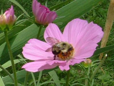 Bee on duty
