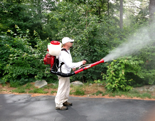 The Mosquito Guy is the Best Choice for an Effective Mosquito Control Company - The Contractor Pros