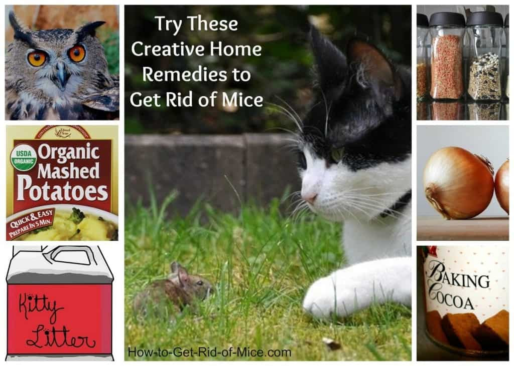 11 Natural Home Remedies to get rid of mice
