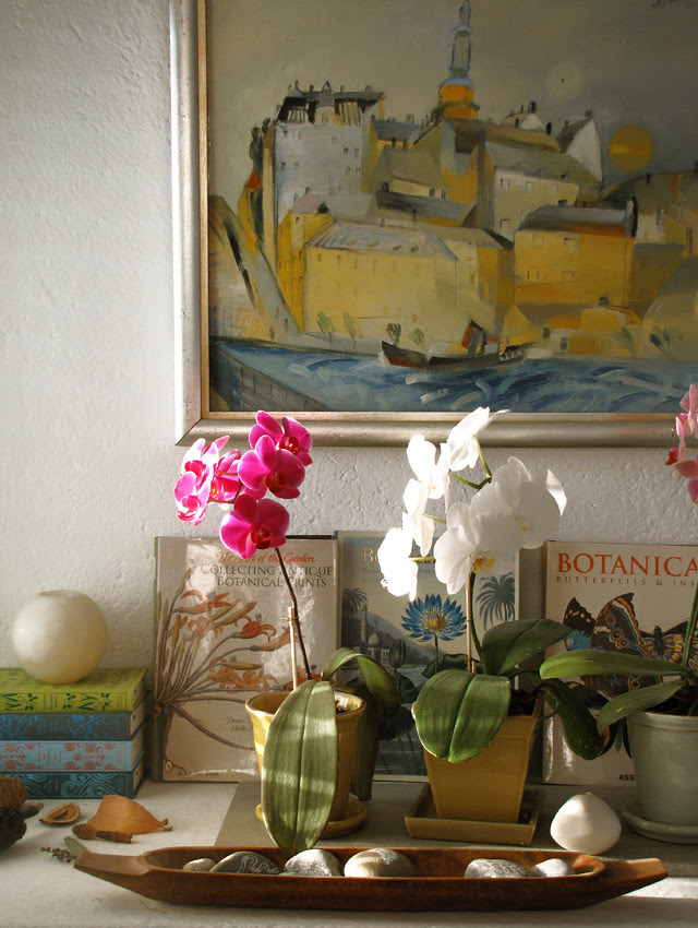 The orchids are thriving