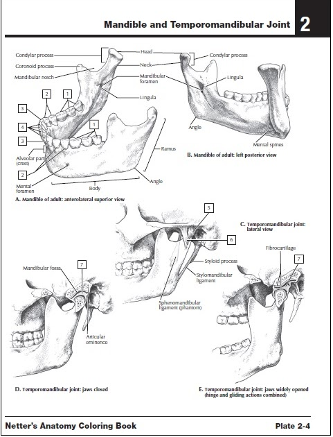 37 [pdf] ANATOMY COLORING BOOK CHAPTER 8 PRINTABLE and