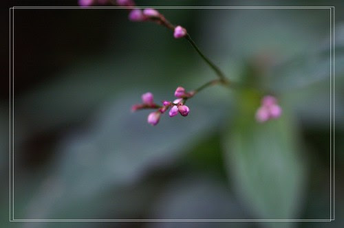 PICT8088