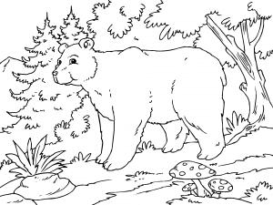 Dibujos De Animales Del Bosque Para Colorear Paracolorear Net