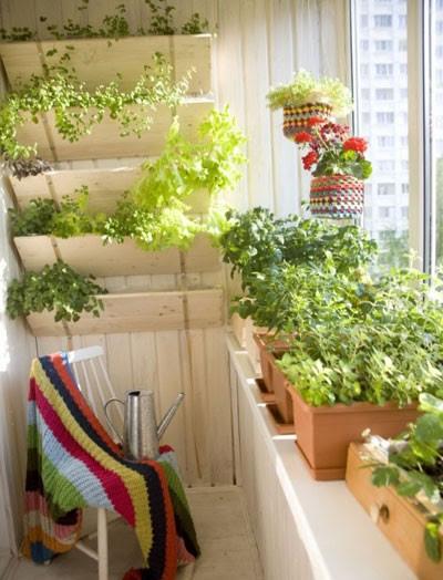 Biến tấu ban công với chậu cây cảnh thành góc vườn nhỏ dễ thương