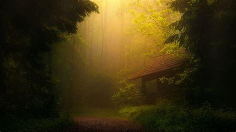 full hd wallpaper fog house forest amazing desktop