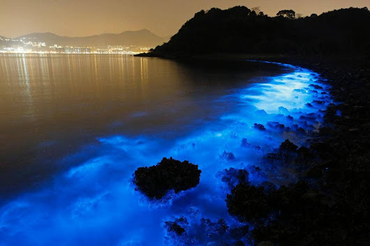 Beautiful, eerie fluorescent glow of Hong Kong seas indicates harmful algal bloom at work