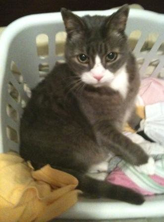 LB in Laundry Basket