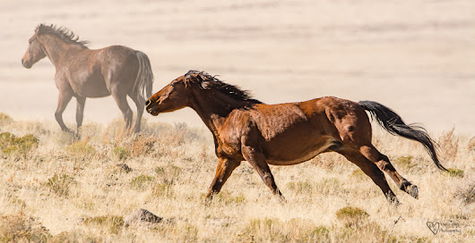 Wild Horse Freedom - Tales from the Backroad