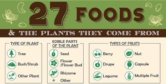 27 Foods and the Plants They Come From [Infographic]