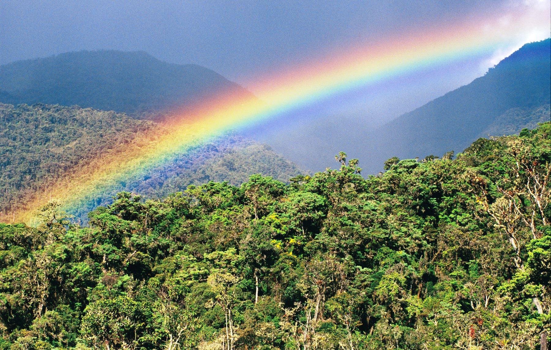 Perú ocupa el cuarto lugar en el mundo como poseedor de bosques tropicales, así como la novena posición entre las naciones con mayor superficie forestal en el planeta, dado que más del 60% de su territorio está compuesto de bosques. ANDINA/Difusión