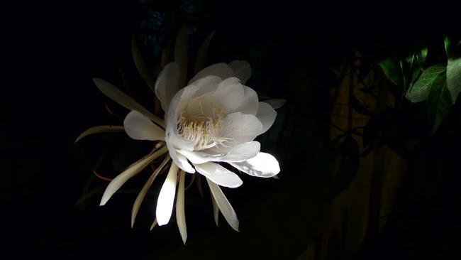 080730 flower (25)
