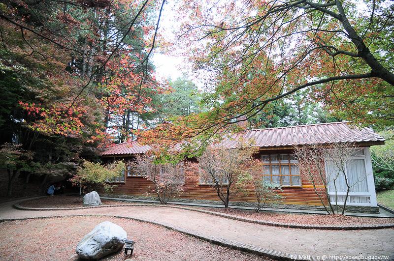 福壽山農場楓紅-4