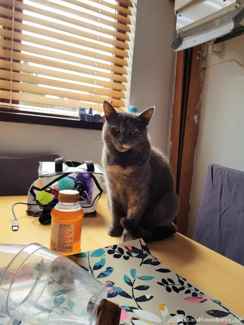 Cat Lost / Missing (Female, Grey And Peach), 5 Anner Road, Inchicore Dublin 8 Sun, Apr 22nd, 2018