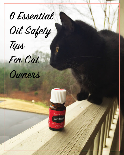 6 Essential Oil Safety Tips for Cat Owners | Meow Lifestyle