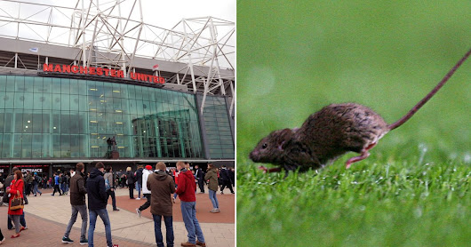 'SQUEAKY bum time' as Manchester United warned over pest control at Old Trafford