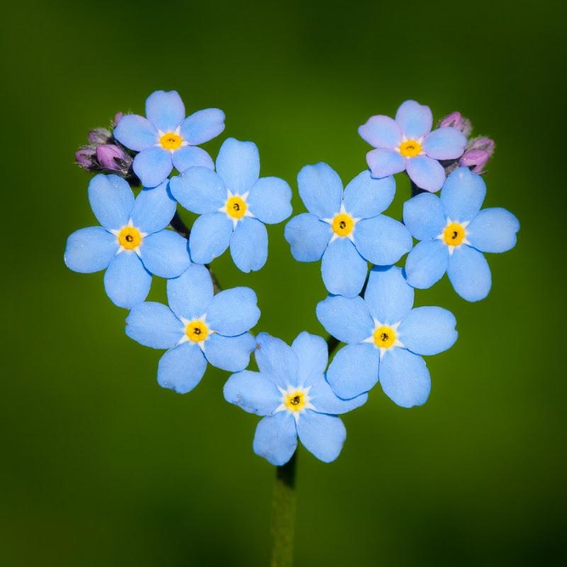 37 фотографий о том, что природа нас любит любовь, природа