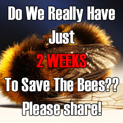 Off-Grid   » Urgent: Save The Bees